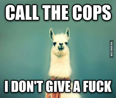 llama macro police reaction // 650x548 // 27.4KB