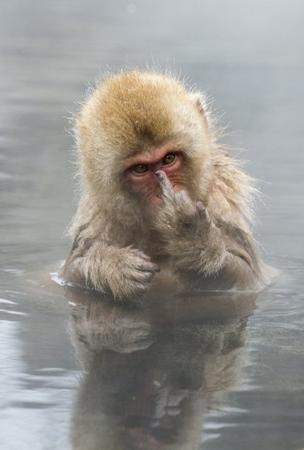 fuck_you insult monkey photo reaction // 499x739 // 45.4KB