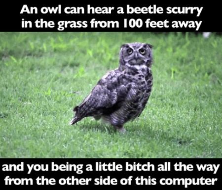 insult owl photo // 500x427 // 316.7KB