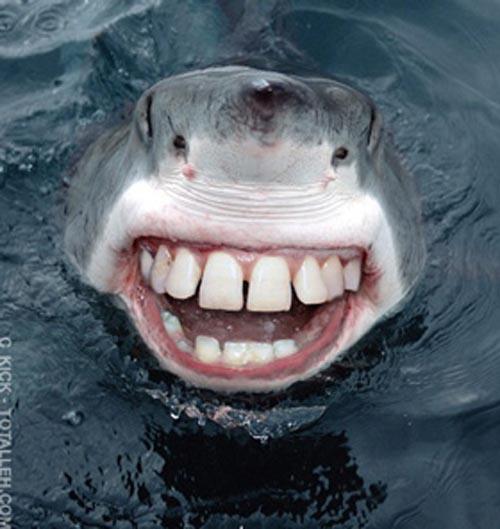 image  creepy humor shark teeth