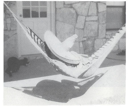 bw hammock humor photo sombrero // 468x396 // 161.0KB