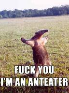 anteater fuck_you macro // 373x500 // 65.2KB