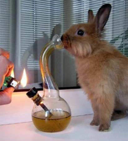 bong bunny humor lighter // 412x452 // 31.2KB