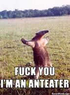 anteater fuck_you insult macro // 373x500 // 31.2KB