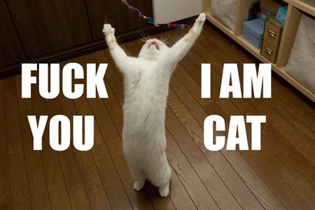 cat humor insult lolcat macro photo // 500x333 // 235.7KB