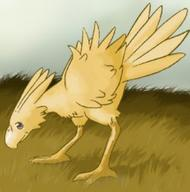 chocobo final_fantasy // 250x252 // 13.0KB