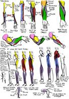 anatomy arm composite how-to-draw leg muscles // 700x1000 // 260.3KB
