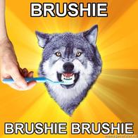 brushie courage_wolf macro toothbrush wolf // 500x500 // 178.6KB