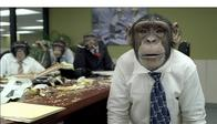 chimpanzee meeting necktie // 1024x587 // 210.6KB