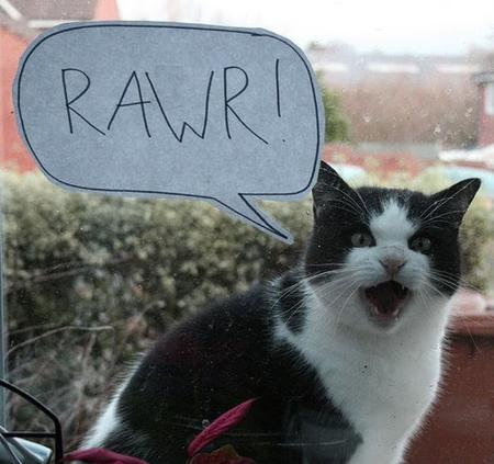 cat humor photo rawr // 500x470 // 46.0KB