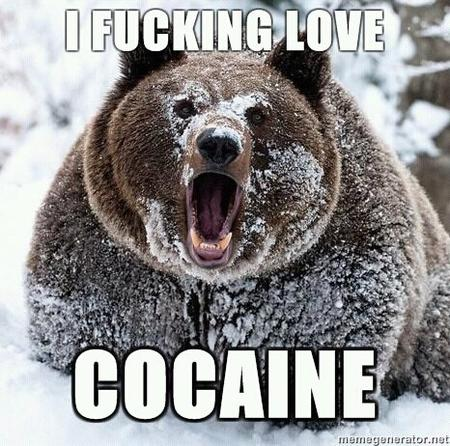 bearlore cocaine humor macro // 466x462 // 75.8KB