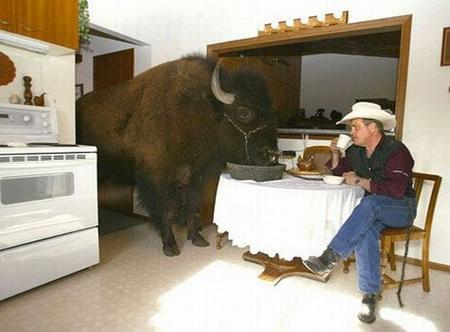 bison coffee cowboy kitchen photo // 700x517 // 53.2KB