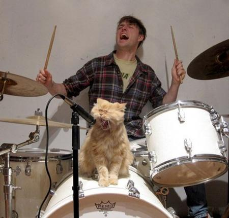cat drums humor photo singer // 600x573 // 72.7KB