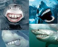 composite creepy derp shark teeth // 600x493 // 66.5KB