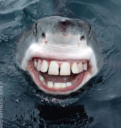 creepy humor shark teeth // 500x529 // 64.4KB