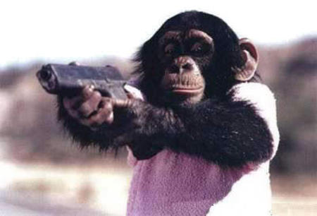 chimpanze gun photo // 400x272 // 14.7KB
