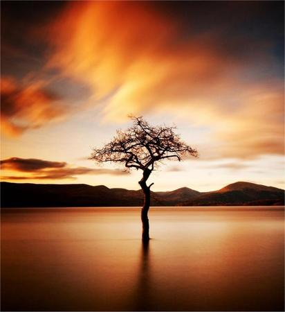 photo tree // 900x984 // 71.5KB
