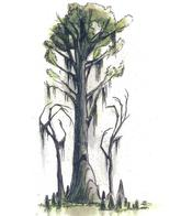 dnd tony_diterlizzi tree // 497x591 // 262.8KB