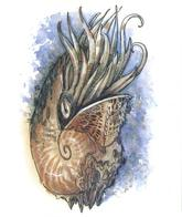 conch dnd tony_diterlizzi // 497x591 // 337.1KB