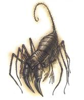 dnd scorpion tony_diterlizzi // 497x591 // 230.3KB
