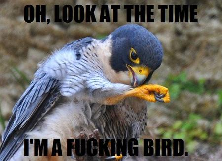 bird fbomb humor macro watch // 500x362 // 49.2KB