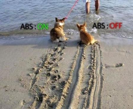 abs beach corgi dog humor photo // 960x783 // 94.6KB
