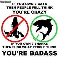 badass cat crazy shark sign // 400x400 // 31.9KB