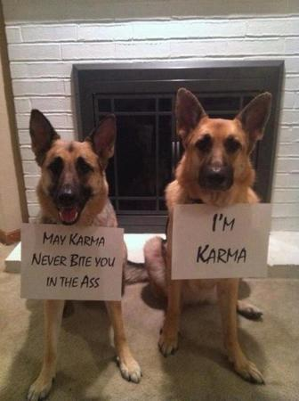 dog german_shepherd humor karma photo sign // 598x800 // 55.1KB