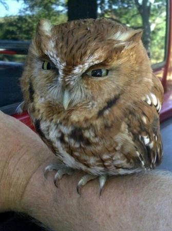 owl photo reaction // 500x672 // 49.6KB