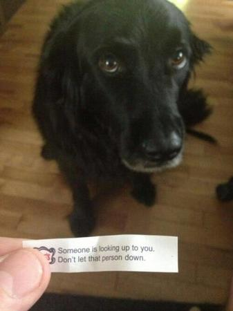 dog fortune_cookie photo // 500x667 // 26.4KB