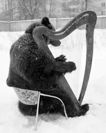 bear harp photo snow // 500x629 // 51.4KB