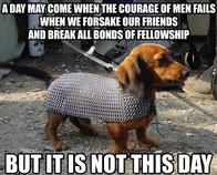 barding chainmail dog lotr macro quote // 500x402 // 63.7KB
