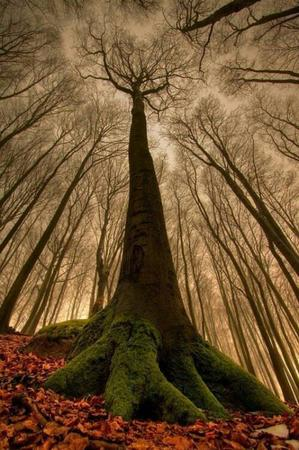 photo scenery tree // 499x751 // 78.5KB