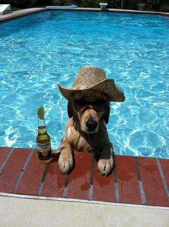 beer dog hat photo pool sunglasses // 500x669 // 61.8KB
