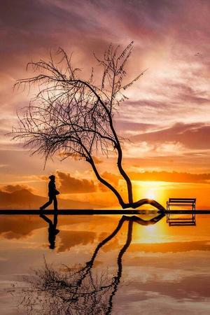 bench photo scenery silhouette tree // 500x750 // 67.9KB