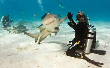 high_five photo scuba shark // 500x311 // 21.0KB