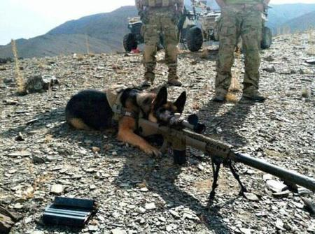 dog photo rifle sniper // 550x410 // 59.2KB