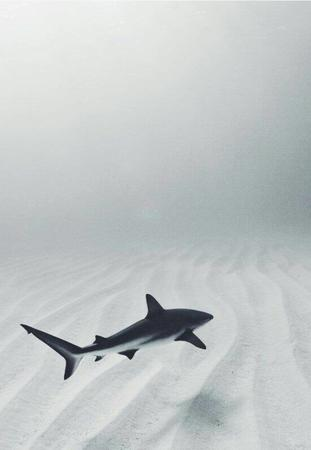 photo shark // 550x796 // 29.4KB