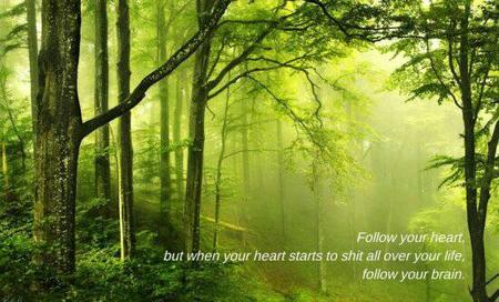 forest humor photo quote // 550x333 // 47.0KB