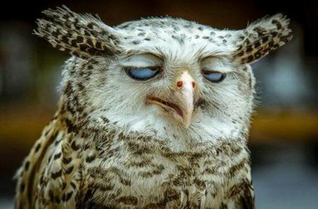 humor owl photo reaction // 550x363 // 36.2KB