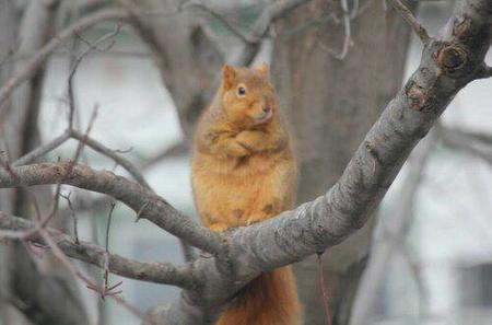 photo reaction squirrel tree // 500x330 // 21.0KB