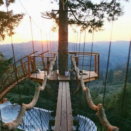 bridge photo scenery tree treehouse // 600x600 // 66.5KB