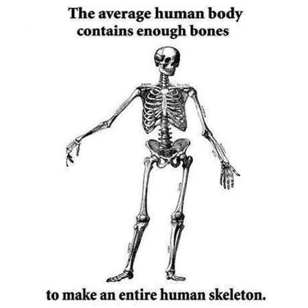 bw humor skeleton // 460x460 // 17.3KB