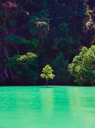 lake photo scenery tree // 600x812 // 69.1KB