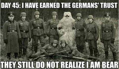 bear bw germany humor macro // 460x270 // 72.4KB