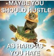 cat haters hustle pizza quote taco turtle // 600x617 // 52.6KB