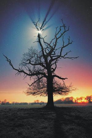 moon photo scenery tree // 600x901 // 75.5KB