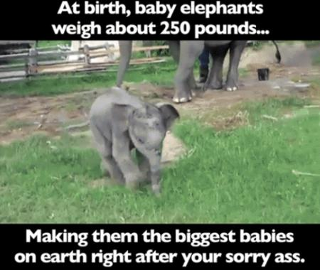 elephant humor insult macro photo // 500x422 // 283.4KB