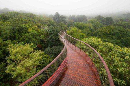 bridge fog forest photo scenery // 600x400 // 58.8KB