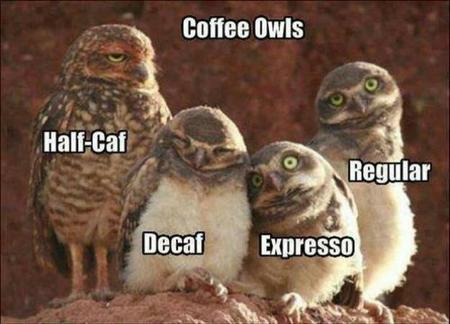 coffee macro owl photo // 625x450 // 39.7KB